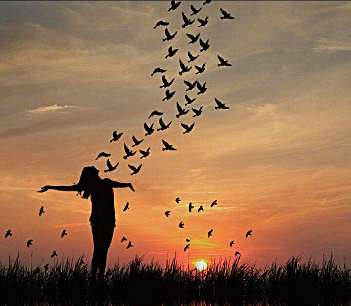 birdssillhouette
